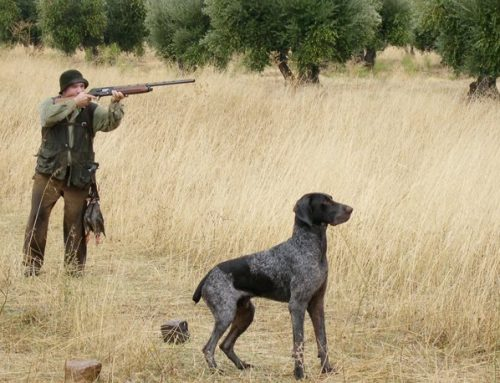 Se suspendió hasta el 2021 la caza menor en toda la Provincia