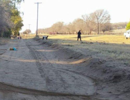 La Pampa: Un abogado representará a un perro que atropelló y mató un funcionario
