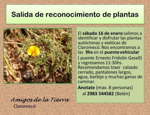 Amigos de la Tierra realiza una salida de reconocimiento de plantas